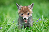 MAM 12 GL0001 01