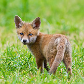 MAM 12 KH0001 01