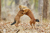 MAM 12 MC0003 01