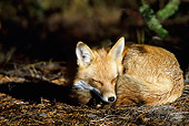 MAM 12 TK0001 01