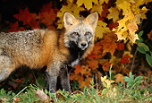 MAM 12 TK0002 01