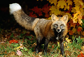 MAM 12 TK0003 01