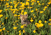 MAM 12 TL0001 01
