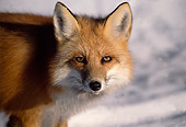 MAM 12 TL0003 01