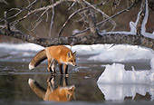 MAM 12 TL0004 01