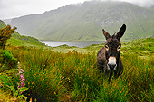 MAM 14 AC0001 01