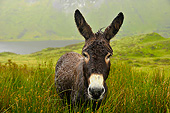 MAM 14 AC0002 01