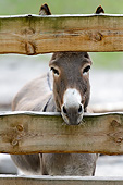 MAM 14 AC0004 01