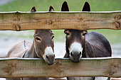 MAM 14 AC0005 01