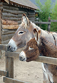 MAM 14 GL0001 01
