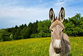 MAM 14 KH0053 01