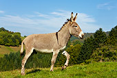 MAM 14 KH0054 01