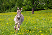 MAM 14 KH0055 01