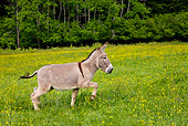 MAM 14 KH0056 01
