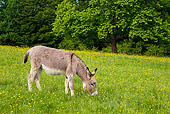 MAM 14 KH0057 01