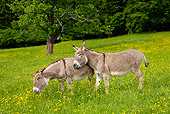 MAM 14 KH0058 01