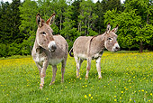 MAM 14 KH0059 01