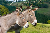 MAM 14 KH0060 01