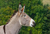 MAM 14 KH0062 01