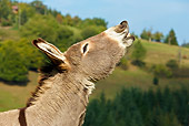 MAM 14 KH0063 01