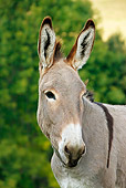 MAM 14 KH0064 01