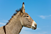 MAM 14 KH0065 01