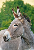 MAM 14 KH0066 01