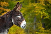 MAM 14 KH0067 01