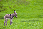 MAM 14 KH0075 01