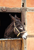 MAM 14 KH0077 01