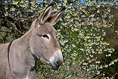 MAM 14 KH0079 01