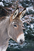 MAM 14 KH0081 01
