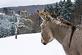 MAM 14 KH0082 01
