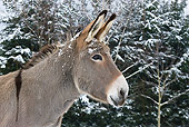 MAM 14 KH0083 01
