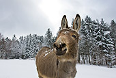 MAM 14 KH0086 01
