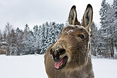 MAM 14 KH0087 01