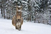 MAM 14 KH0088 01