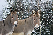 MAM 14 KH0090 01