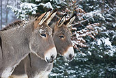 MAM 14 KH0091 01