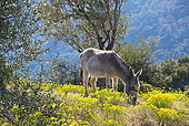 MAM 14 KH0092 01