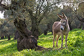 MAM 14 KH0093 01