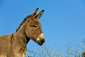 MAM 14 KH0095 01