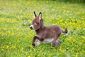 MAM 14 KH0098 01