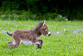 MAM 14 KH0099 01