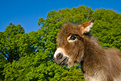MAM 14 KH0101 01