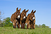 MAM 14 KH0106 01