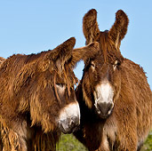 MAM 14 KH0107 01