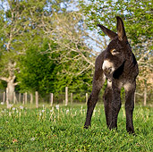 MAM 14 KH0112 01