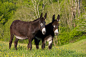MAM 14 KH0113 01