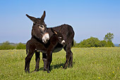 MAM 14 KH0116 01